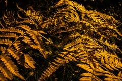 抽象秋天设计 库存照片