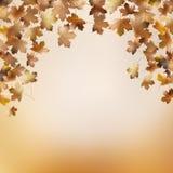 抽象秋季背景模板。EPS 10 免版税库存图片