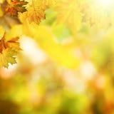 抽象秋季背景 库存图片