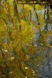 抽象秋季自然本底:树的反射与黄色叶子的与波纹的水表面上 免版税库存图片