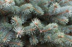 抽象空白背景圣诞节黑暗的装饰设计模式红色的星形 冷杉查出的结构树白色 库存照片