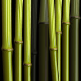 抽象竹增长密林 库存照片