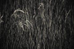 抽象米领域 黑白口气 免版税库存图片