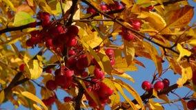 抽象红色和黄色叶子在好日子, 免版税图库摄影
