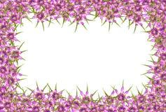 抽象红色紫色未知的花框架 图库摄影