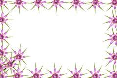 抽象红色紫色未知的花框架 免版税库存照片