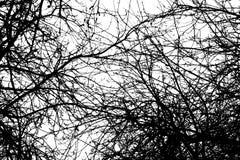 抽象纹理荧光的背景 免版税库存图片