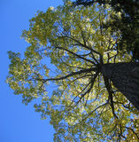 抽象结构树垂直 库存照片