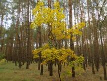 抽象结构树 图库摄影