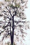 抽象结构树 免版税图库摄影