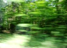 抽象绿树林 库存图片