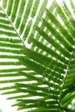抽象绿色叶子在自然背景中 免版税库存图片