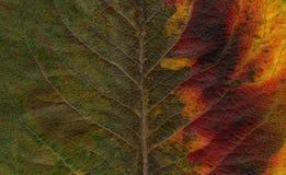 抽象绿色叶子红色 免版税库存图片