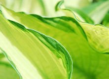 抽象绿色叶子 库存图片