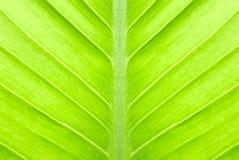 抽象绿色叶子 图库摄影