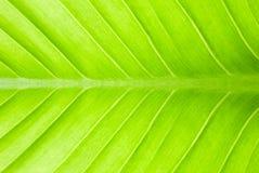 抽象绿色叶子 免版税库存图片