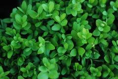 抽象绿色留下纹理庭院公园夏天春天的自然背景 免版税库存图片