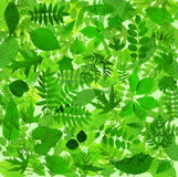 抽象绿色留下背景 库存照片