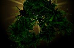 抽象绿色破裂的背景 库存图片