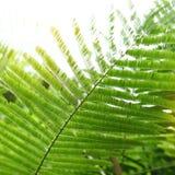 抽象绿色离开本质上,阳光通过在树的叶子 库存照片