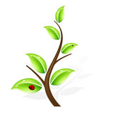 抽象绿色结构树 库存图片