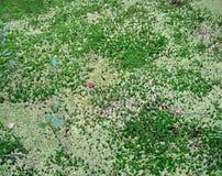 抽象绿色青苔,森林详细资料, 库存图片