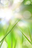 抽象美丽的新鲜的草 库存图片