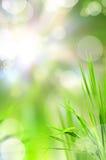 抽象美好的新草光反射 库存照片