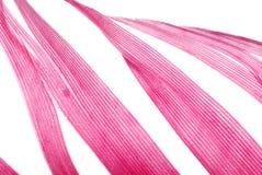 抽象羽毛红色纹理 免版税库存照片