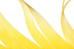 抽象羽毛纹理黄色 免版税库存图片