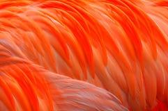 抽象羽毛 库存照片