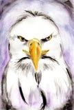 抽象老鹰水彩绘画 向量例证