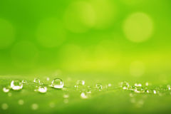 抽象背景、绿色叶子纹理和雨下落 免版税库存照片