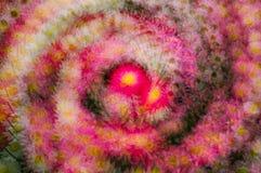 抽象背景五颜六色的花 免版税库存照片