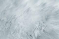 抽象背景关闭毛皮纹理 软软地情感柔和的光滑的镇静和微妙的细节 免版税图库摄影