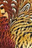 抽象背景包括的野鸡rigneck 免版税库存照片