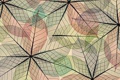 抽象背景叶子概要 库存图片