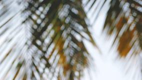 抽象背景和bokeh与被弄脏的椰子叶子 股票录像