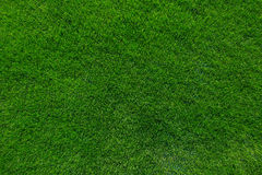 抽象背景城市草绿色草坪公园纹理视图 免版税库存图片