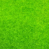 抽象背景城市草绿色草坪公园纹理视图 免版税图库摄影