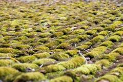 抽象背景增长的青苔屋顶 免版税库存图片