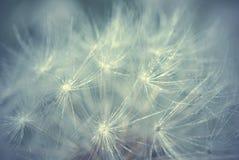 抽象背景开发细丝许多花的宏指令稀薄的万维网 图库摄影