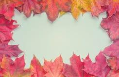 抽象背景异教徒青绿 空白是蓝色的,构筑由明亮的色的槭树叶子 秋天 免版税库存照片