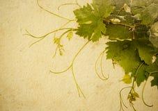 抽象背景样式葡萄酒 库存照片
