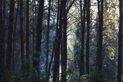 抽象背景森林烟木 免版税图库摄影