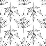 抽象背景留给槭树模式无缝 免版税库存照片