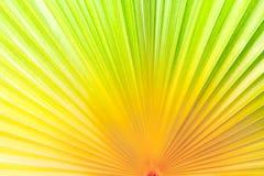 抽象背景的特写镜头gredient颜色噪声棕榈叶 图库摄影