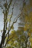 抽象背景秋天心情:水表面上与波纹黑暗的树干树的与光秃的分支和金黄秋天树 免版税库存照片