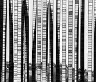 抽象背景竹子玻璃 免版税图库摄影