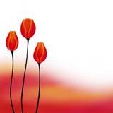 抽象背景红色黄色郁金香花例证 免版税库存照片